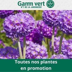 Promos de Jardineries et Animaleries dans le prospectus à Gamm vert ( Expire demain)