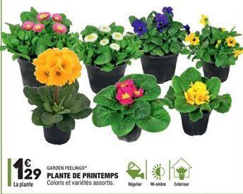 Plante de Printemps offre à 1.29€