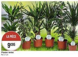 Plantes offre à