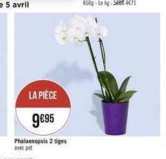 Orchidées offre à