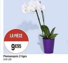 Phalaenopsis 2 tiges offre à