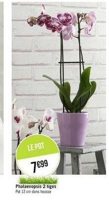 Plantes à fleurs offre à