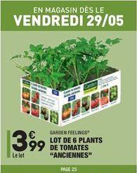 """Lot de 6 plants de tomates """"Anciennes""""  offre à 3,99€"""