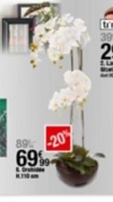 Orchidées offre à 69,99€