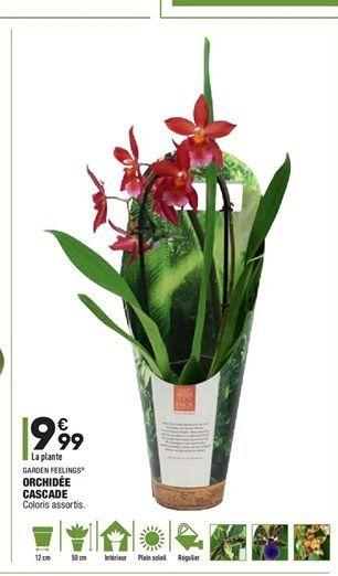 Orchidées cascade offre à 9,99€