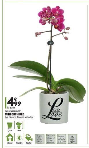 Mini orchidées offre à 4,99€