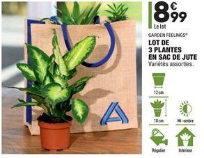 Lot de 3 plantes en sac de jute  offre à 8,99€