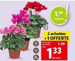 Cyclamen offre à 3,98€