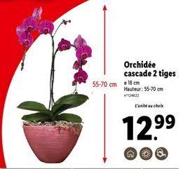 Orchidées offre à 12,99€