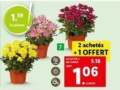 Chrysanthèmes offre à 3,18€