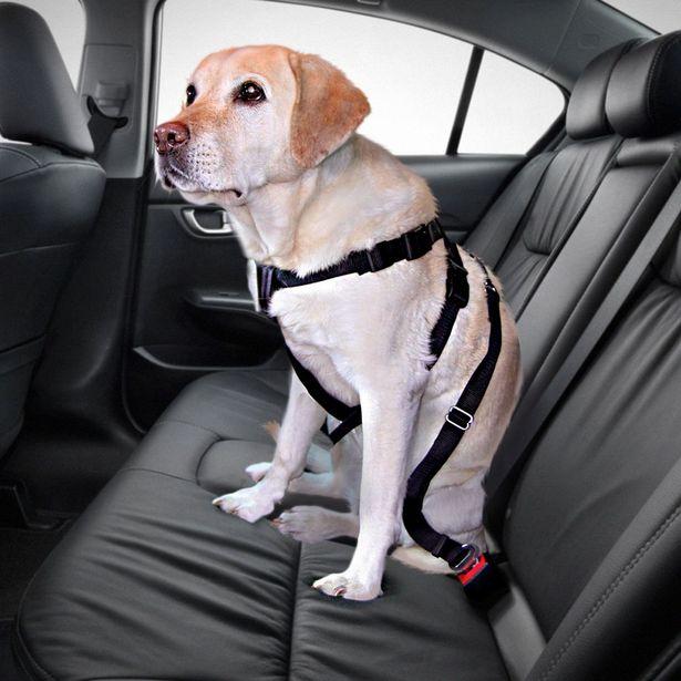 Ceinture de sécurité pour chien taille M Trixie - Tour de poitrail 50 à 70cm offre à 6,49€