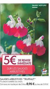Jardin offre à 5€