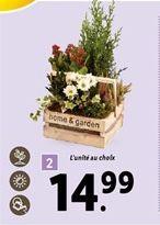 Plantes décoratives offre à 14,99€
