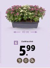 Fleurs offre à 5,99€