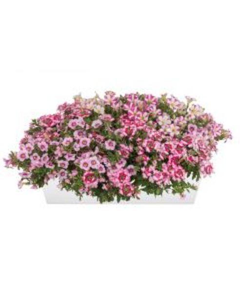 Mélange plantes annuelles estivales - Jardinière 40 cm offre à 9,95€