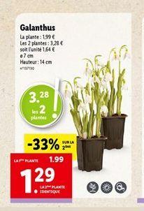 Galanthus  offre à 1,99€
