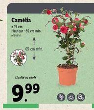 Camélia  offre à 9,99€
