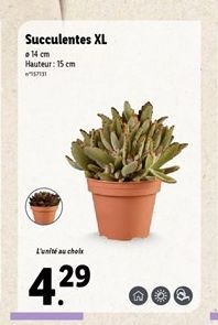 Succulentes XL  offre à 4,29€