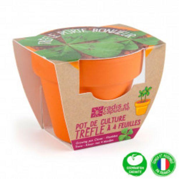 Mini kit d6cm terre cuite trèfle 4 feuilles offre à 3,95€