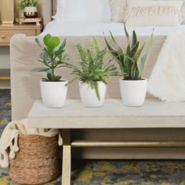 3x Plantes pour chambres à coucher - Mélange incl. cache-pots ... offre à 33,95€