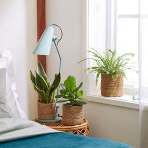 3x Plantes pour chambres à coucher - Mélange incl. paniers offre à 56,99€