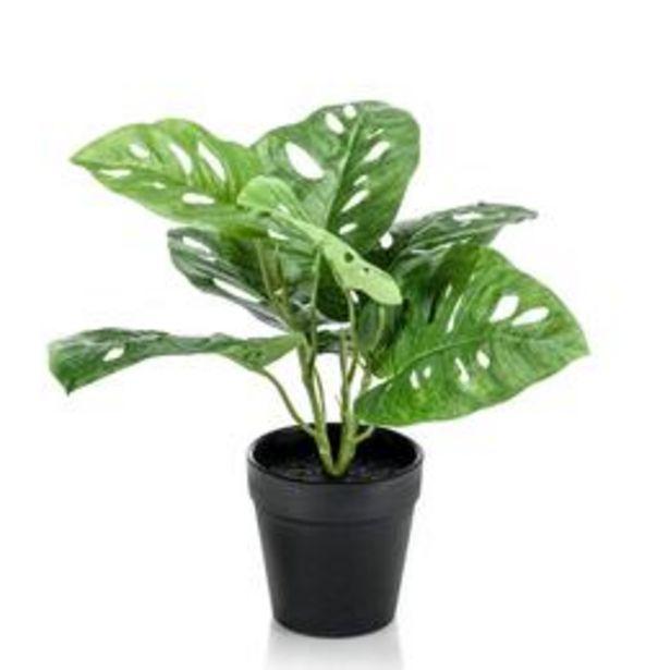 Plante artificielle Plante à trous Monstera 'Monkey Leaf' avec... offre à 11,99€