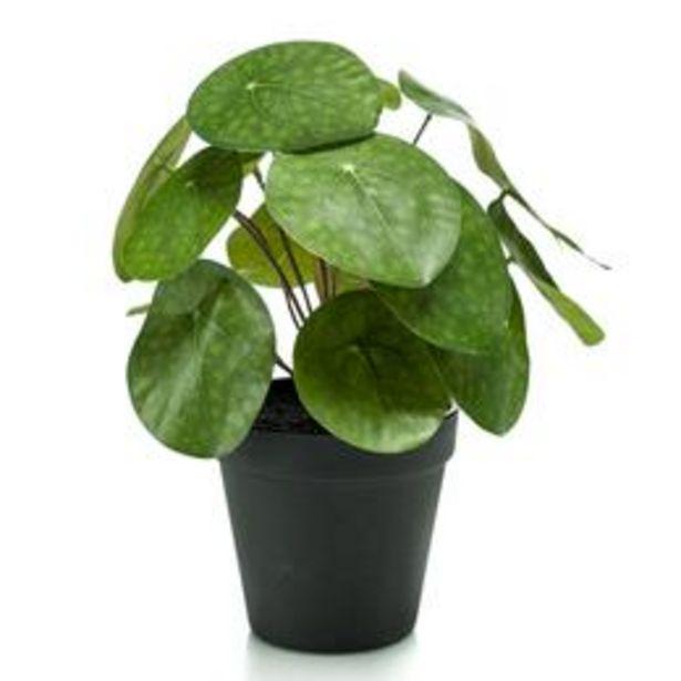 Plante artificielle Plante à monnaie chinoise Pilea avec cache... offre à 14,99€