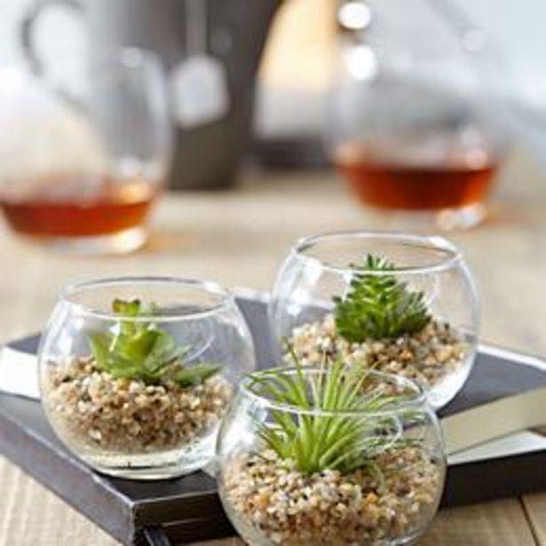 Trio de plantes artificielles offre à 9,95€
