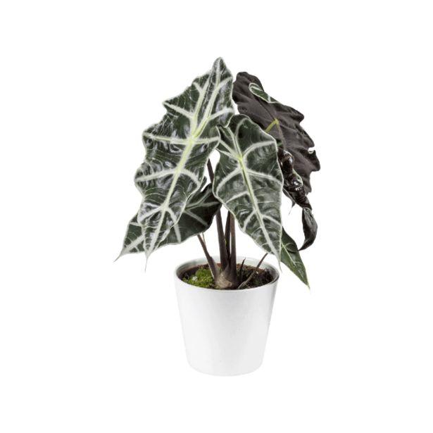 Plante verte offre à 3,99€