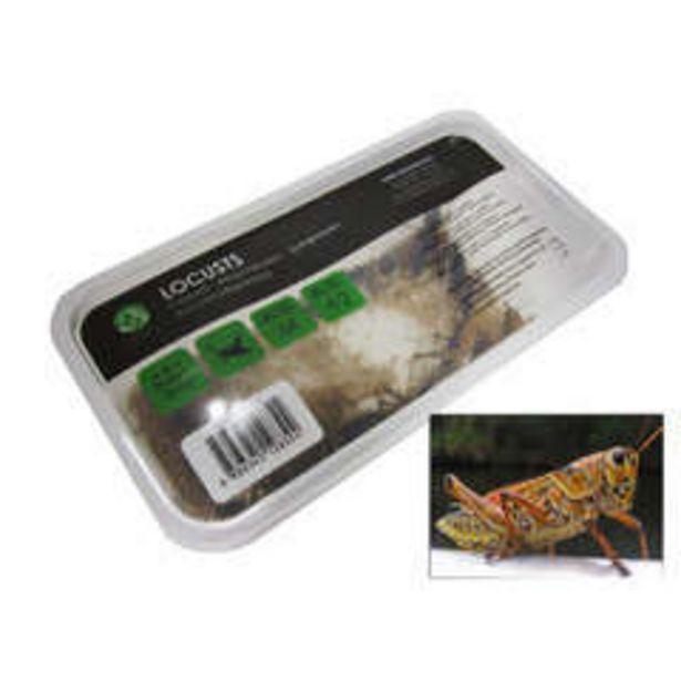 Stoffels - Criquets subadultes pour alimentation reptiles, 10 pièces offre à 5,45€