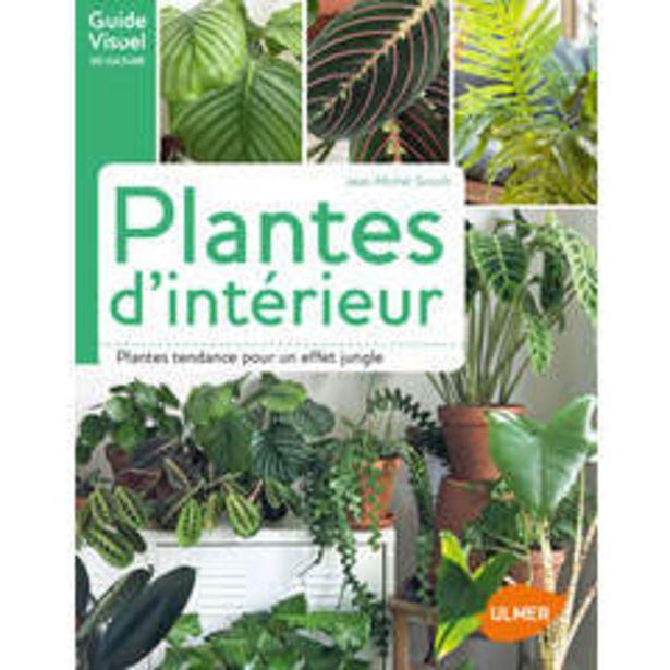 Ulmer - Plantes d'intérieur offre à 15,95€